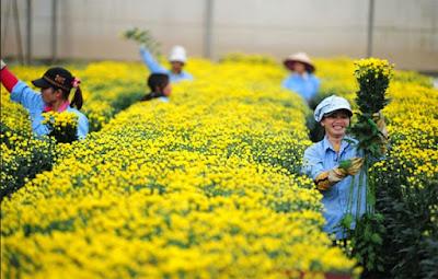 Xuất khẩu lao động Nhật Bản đơn hàng ngắn hạn lương cao