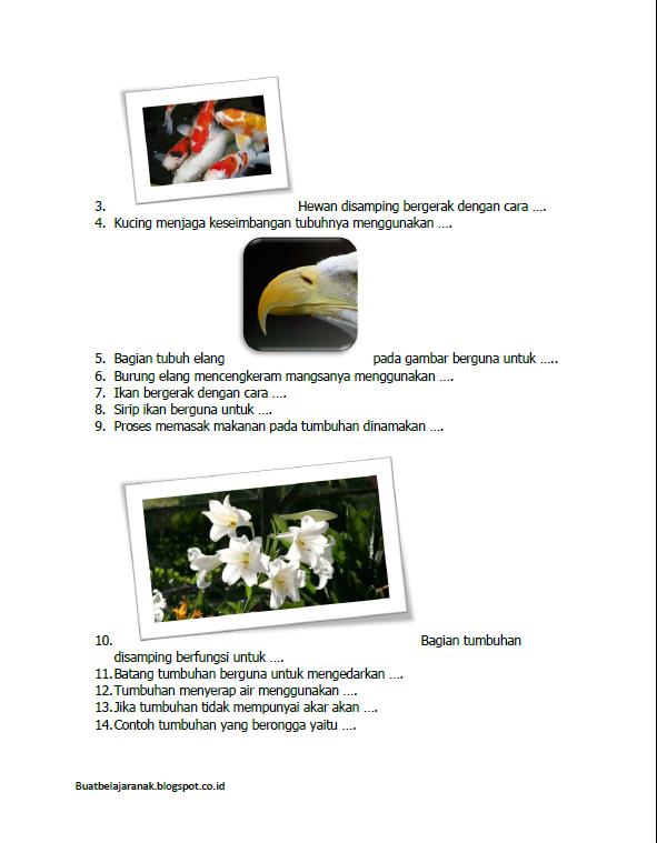 Contoh Latihan Soal Ipa Kelas 2 Sd Bab Mengenal Bagian Bagian Tubuh Hewan Dan Tumbuhan Buat