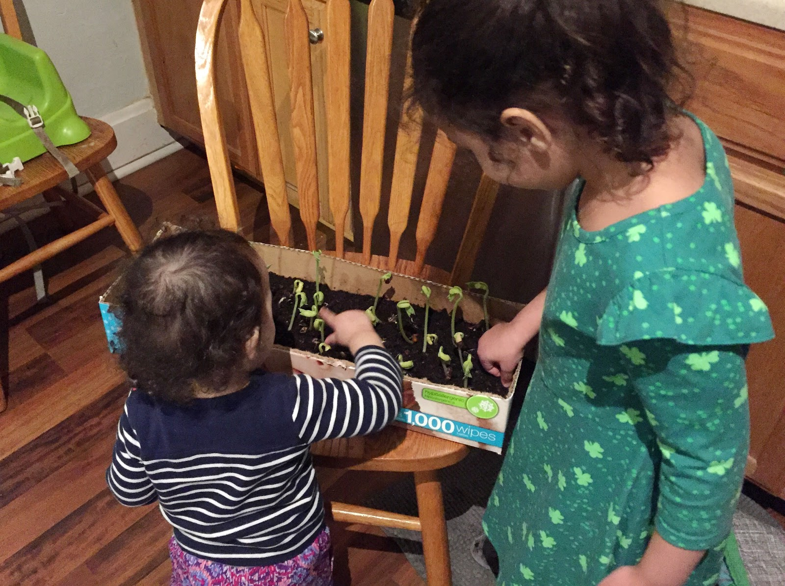 Golden Skies: Vegetable Garden: Getting Things Planted