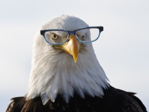 An Eagle Wearing Glasses