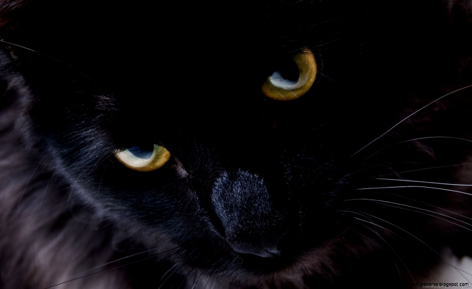 Black Cat Hd Wallpaper Widescreen   High Definitions ...