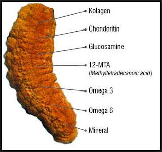 gamat, obat alami, sea cucumber, teripang, timun laut, antioksidan, antikanker, Holothuria scabra, Holothuria leucospilota, Stichopus chloronotus