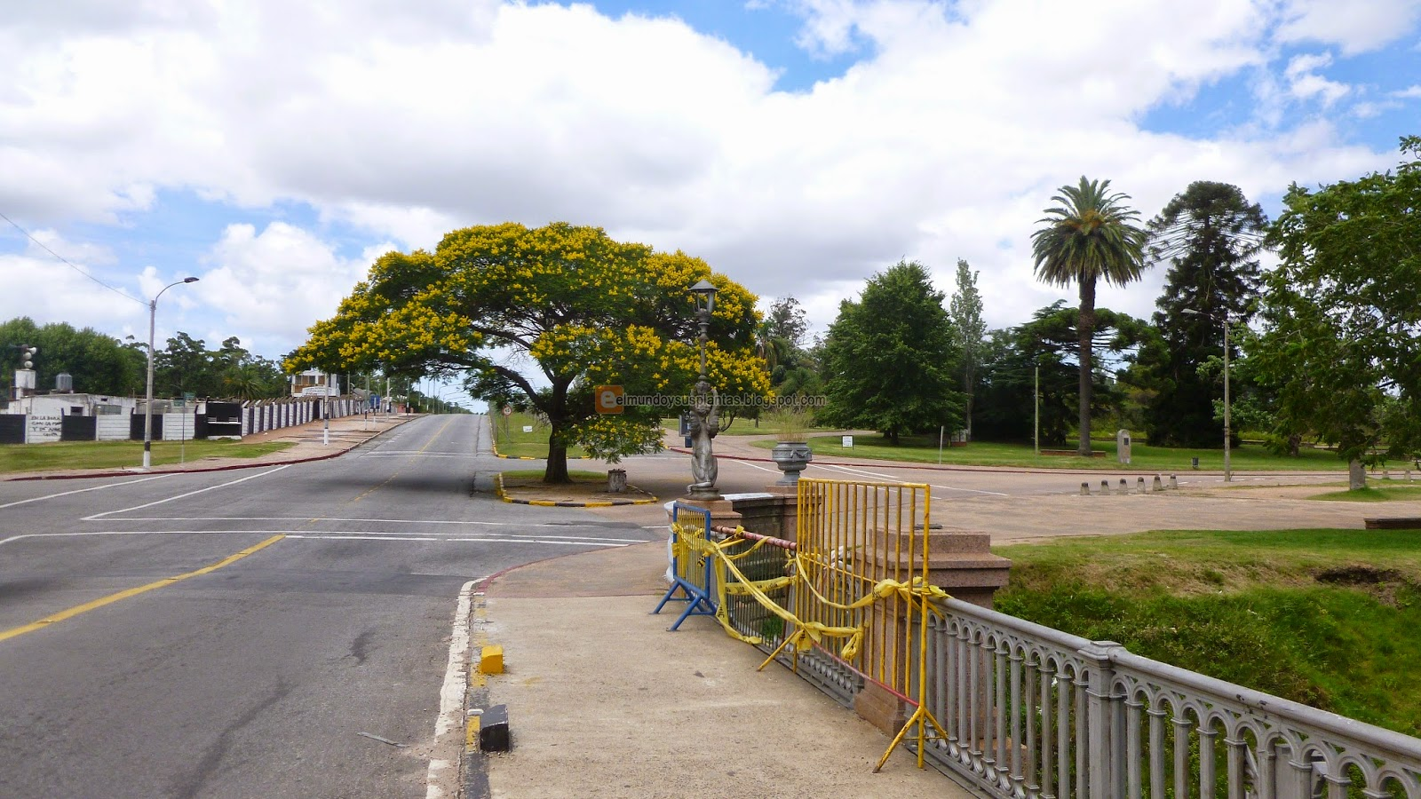 árbol de Ibirapitá