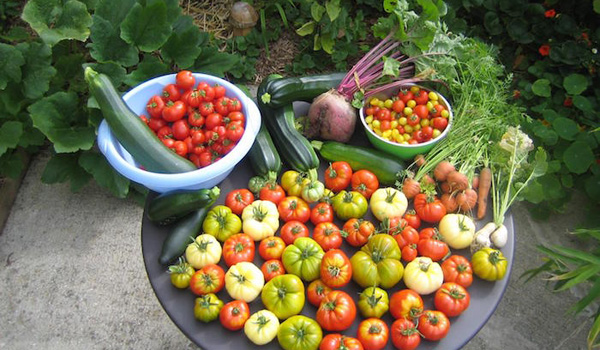 Fawkes news g nial il cultive et r colte 300 kg de for Jardin urbain permaculture