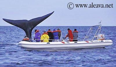 Whale watching in Patagonia Puerto Pirámides