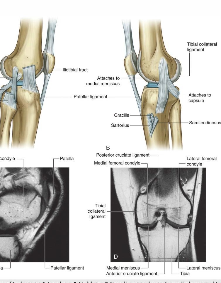 Science Natural Phenomena Medicine Patellar Ligament