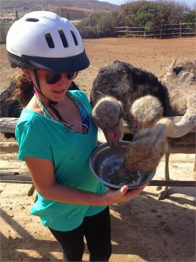 Visit An Ostrich Farm