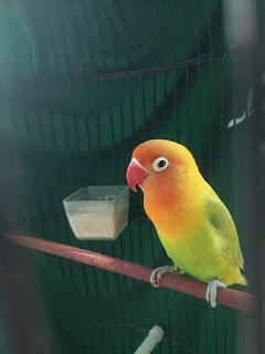 Cara Memahami Bahasa Tubuh Burung