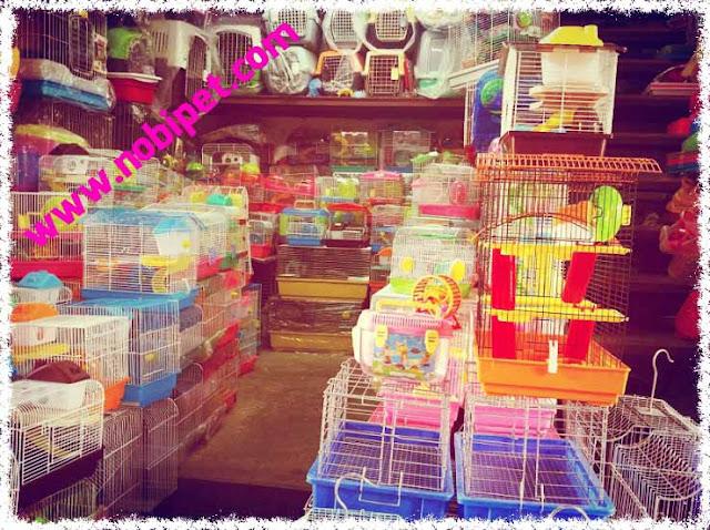 shop-hamster-mua-ban-chuot-canh-gia-re-lon-nhat-viet-nam-2