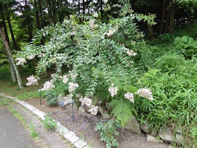 花博記念公園鶴見緑地 バラ園付近の花