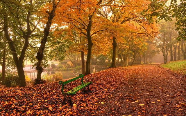 Bankje in het park tijdens de herfst
