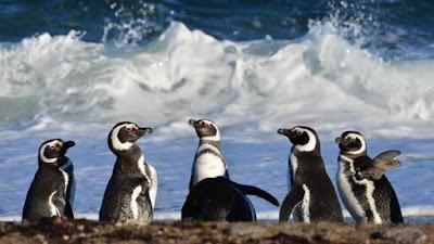 Punta Tombo: Pinguinos en Argentina