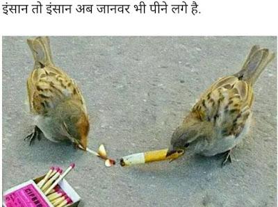 Insaan To Insaan Ab Janwar Bhi Peene Lage Hai Funny Images