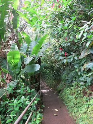 Wahiawa Botanical Garden path