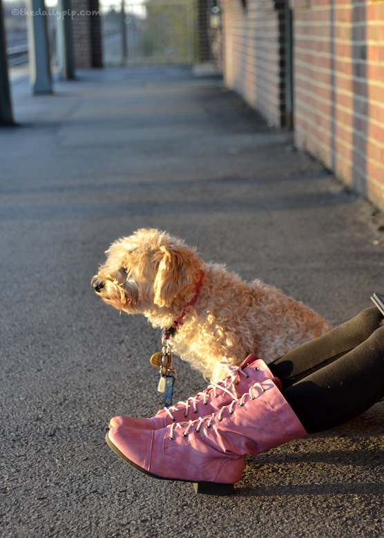 Ruby waits for her family to return home after work on Wordless Wednesday