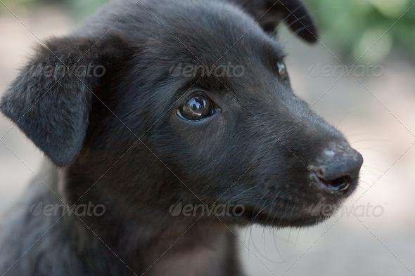 Www Cute Puppies Wallpaper Com Cute Black Puppies Online News Icon