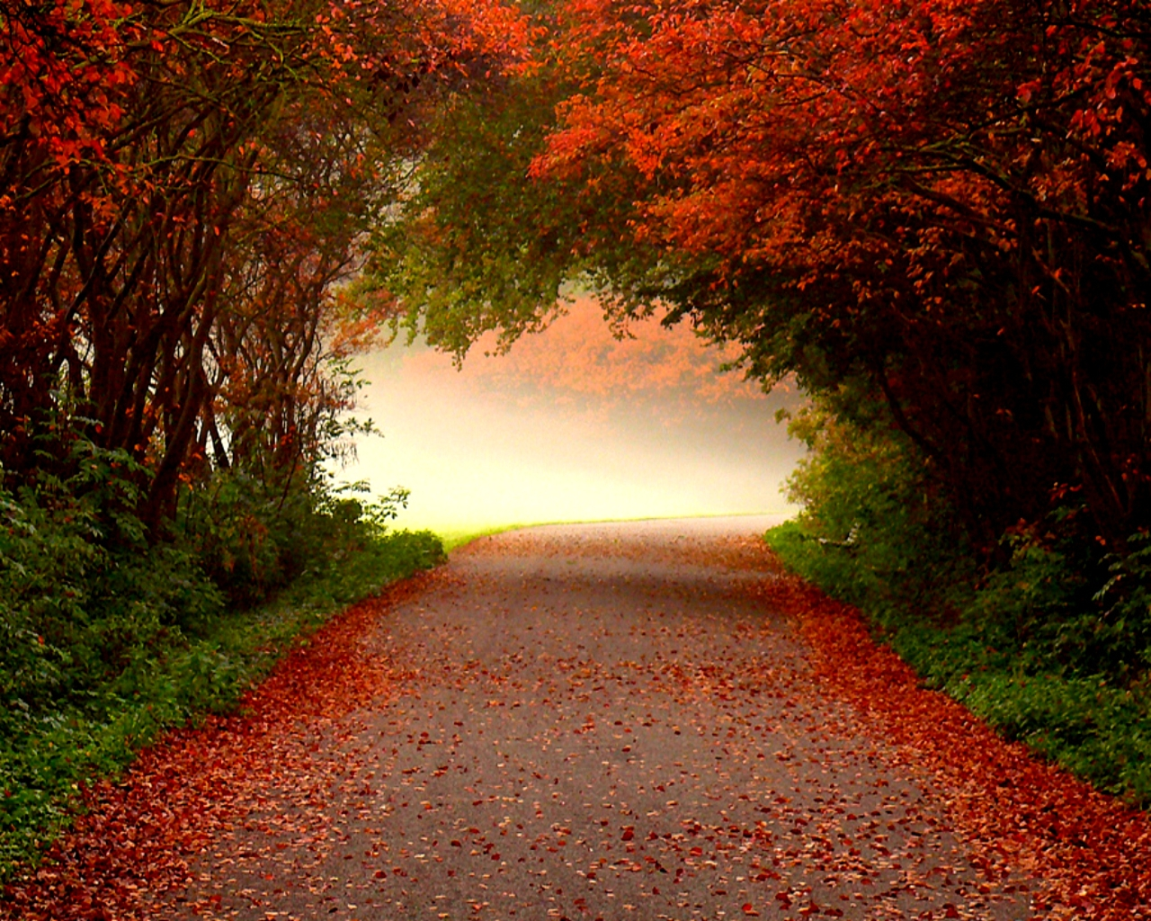 COOL FUNNY PICTURES: Wonderful Autumn Road Wallpapers