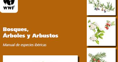 Biologando por el mundo bosques rboles y arbustos for Especies de arbustos