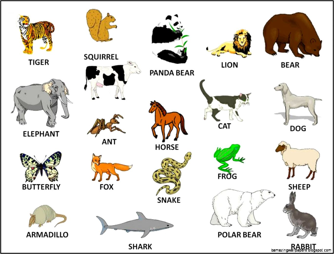 Farm Animals Pictures With Names