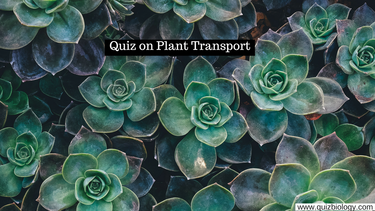 Plant transport mcq