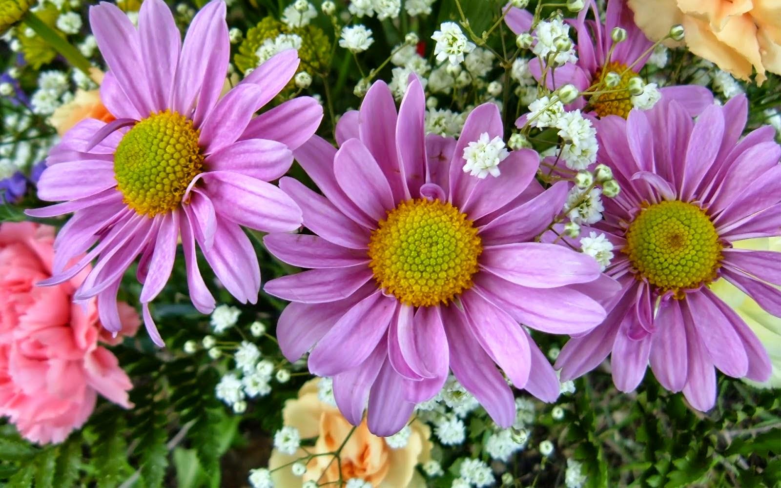 Coleccion De Gifs Fondos De Pantalla De Flores En Hd