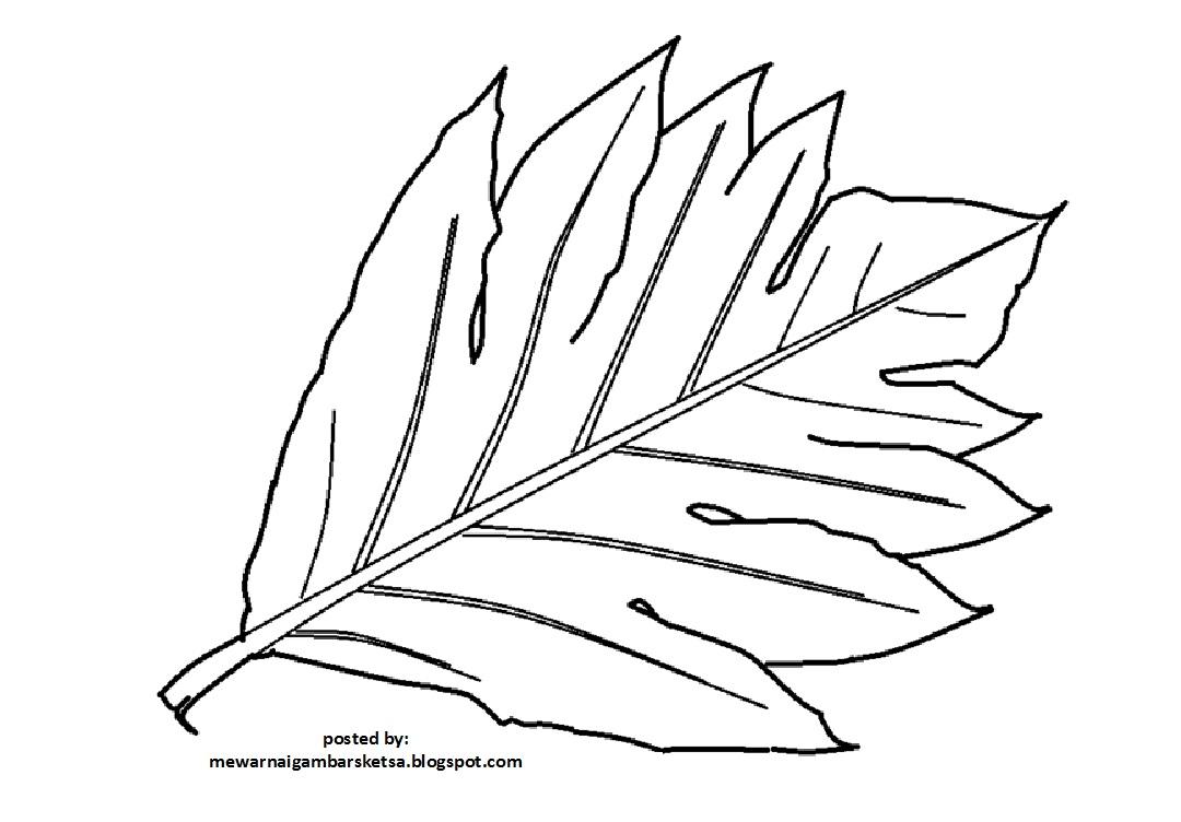 Mewarnai gambar daun gambar mewarnai daun gambar sketsa daun sketsa daun daun gambar daun tumbuhan hijau daun daun hijau mewarnai daun warna daun