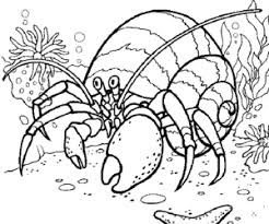 Best Ideas Hermit Crab Coloring Pages Free Download