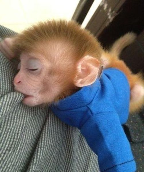 Funny Cool Pictures A Pet Monkey