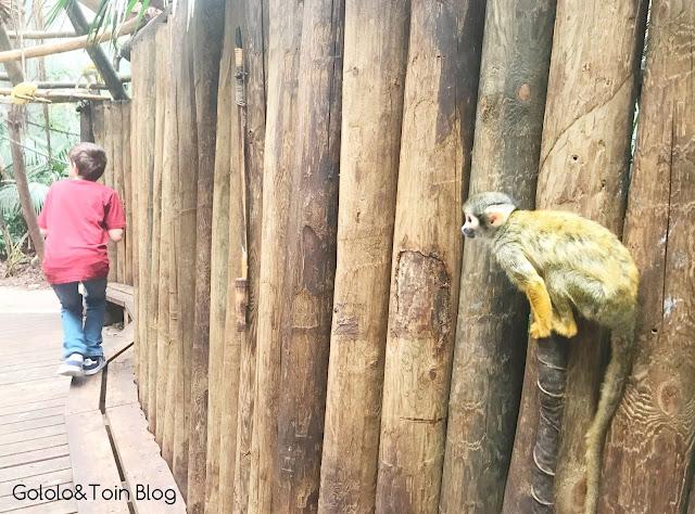 Interacciones con mono ardilla en Madrid
