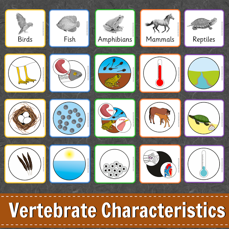 Animal Characteristics Learning Pack