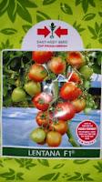 Benih,Lentana, Benih Tomat Lentana, Lentana Murah, tomat, tahan virus,kuning, keriting, unggul, dataran rendah, tinggi, petani, Cap Panah Merah