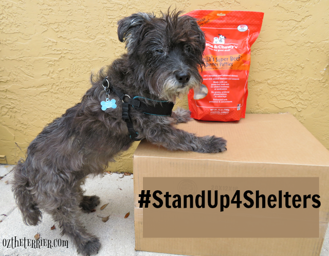 oz participating in Stella & Chewy's #standup4shelters campaign