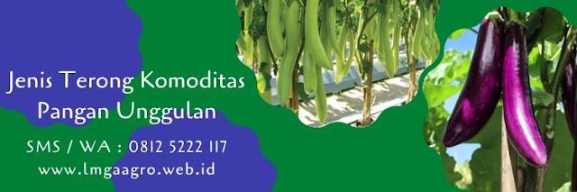 terong,terong ungu,terong hijau,terong belanda,benih terong,bibit terong,budidaya terong,lmga agro