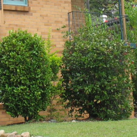 What Is The Difference Between Bushes And Shrubs