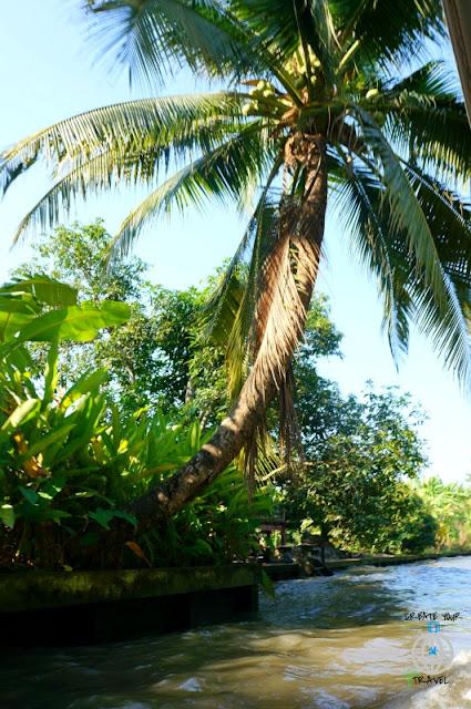 khlongi roślinność