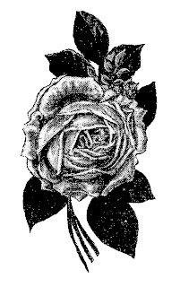 rose flower image illustration transfer digital drawing artwork
