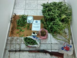 Συνελήφθη 36χρονος στη Χαλκιδική για διακίνηση και καλλιέργεια κάνναβης