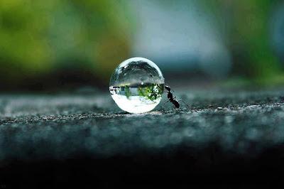 Una Formica dal mondo...