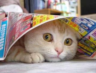 gato cara de susto