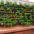 Promising Environmental Benefits Bestowed by Green Walls ~ Vertical Gardens & Gardening Services in Melbourne - Living Holmes Design