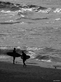 lonely boards