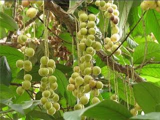 manfaat-buah-rambai-bagi-kesehatan,www.healthnote25.com