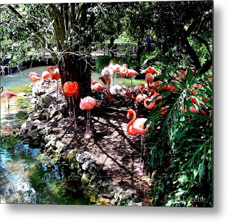 http://c-f-legette.pixels.com/featured/flamingo-river-c-f-legette.html