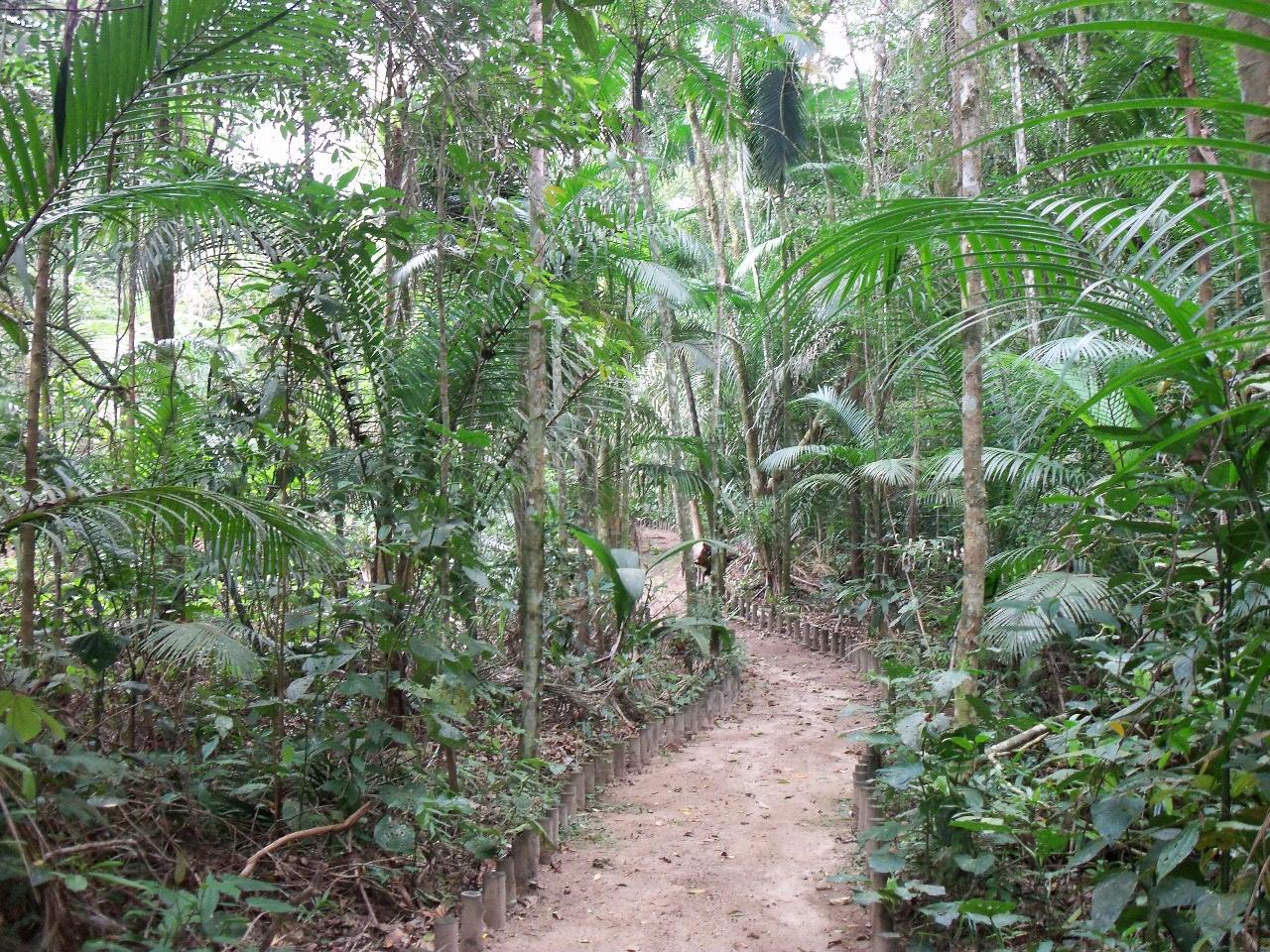 Resultado de imagem para Parque Estadual da Serra do Mar - Núcleo Caraguatatuba