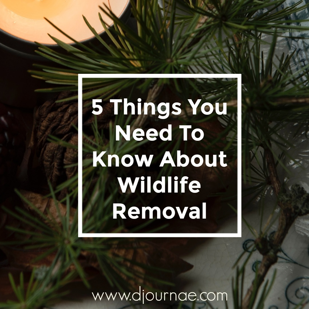 5 Things You Need To Know About Wildlife Removal