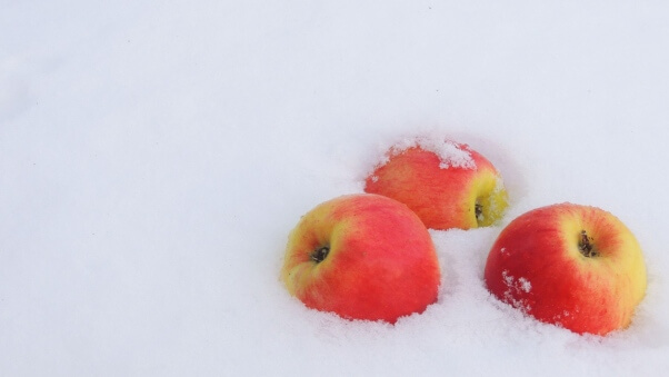 Desktop HD Wallpaper Winter Snow Apples