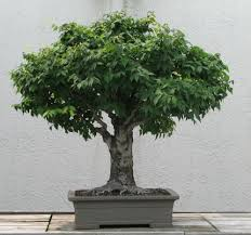 l'albero si addrizza da piccolo