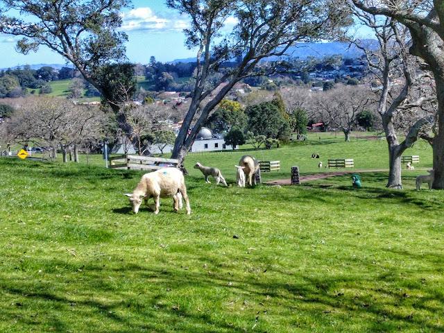 One Tree Hill Auckland Nueva Zelanda