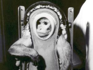 Uzaya Yolculuk Yapan Hayvanlar