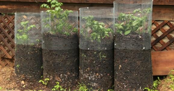 Comment faire pousser jusqu 100 kg de pommes de terre plant s sur votre balcon conseils - Comment faire pousser des pommes de terre ...